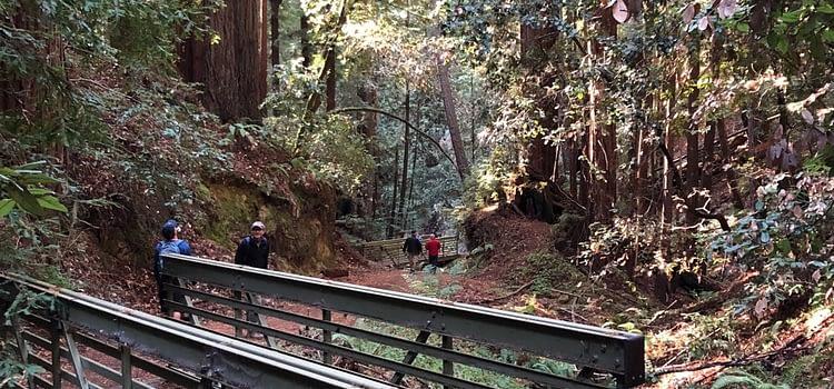 El Corte de Madera Creek Preserve: a Peninsula forest loop