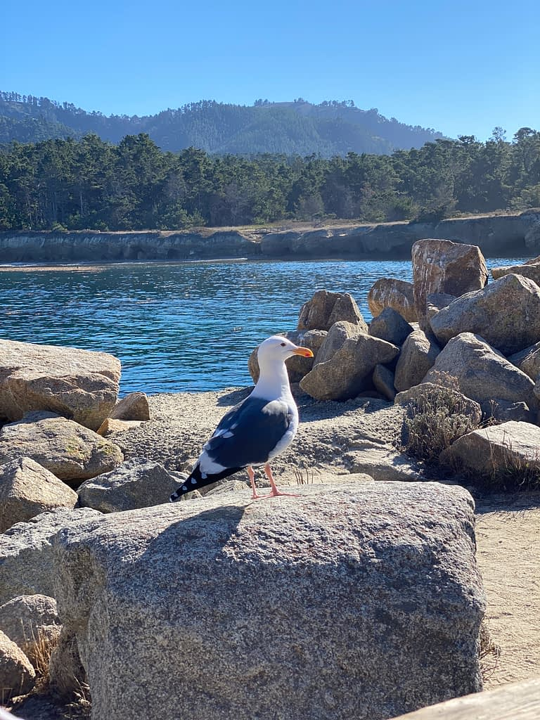 Bird on a rock spotted during a California hike at Point Lobos