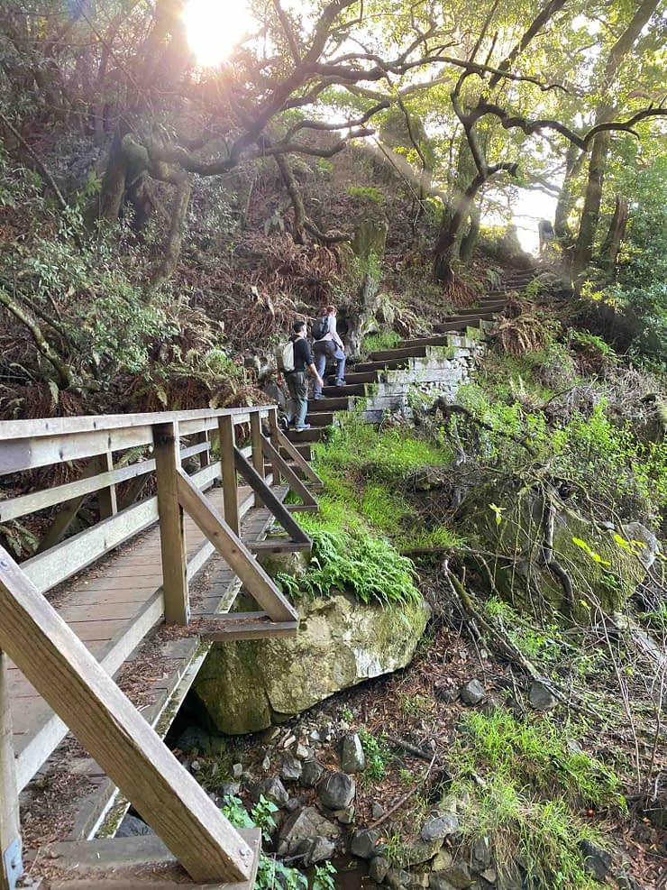 Two people climbing a staircase during a California hike on Mount Tamalpais